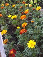 Ideal Gardens.jpg